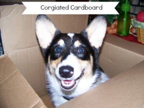 Corgiated Cardboard <span class=