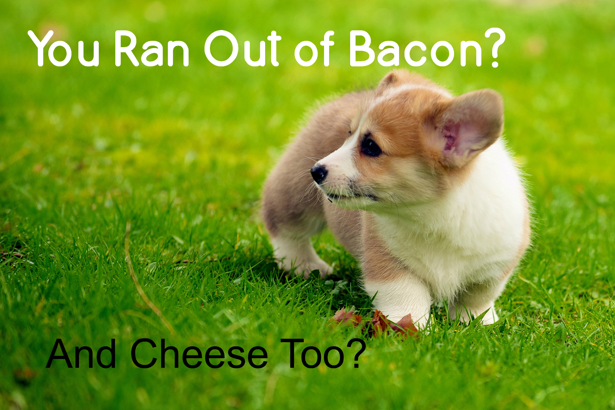 Corgi Puppy Meme Out of Bacon