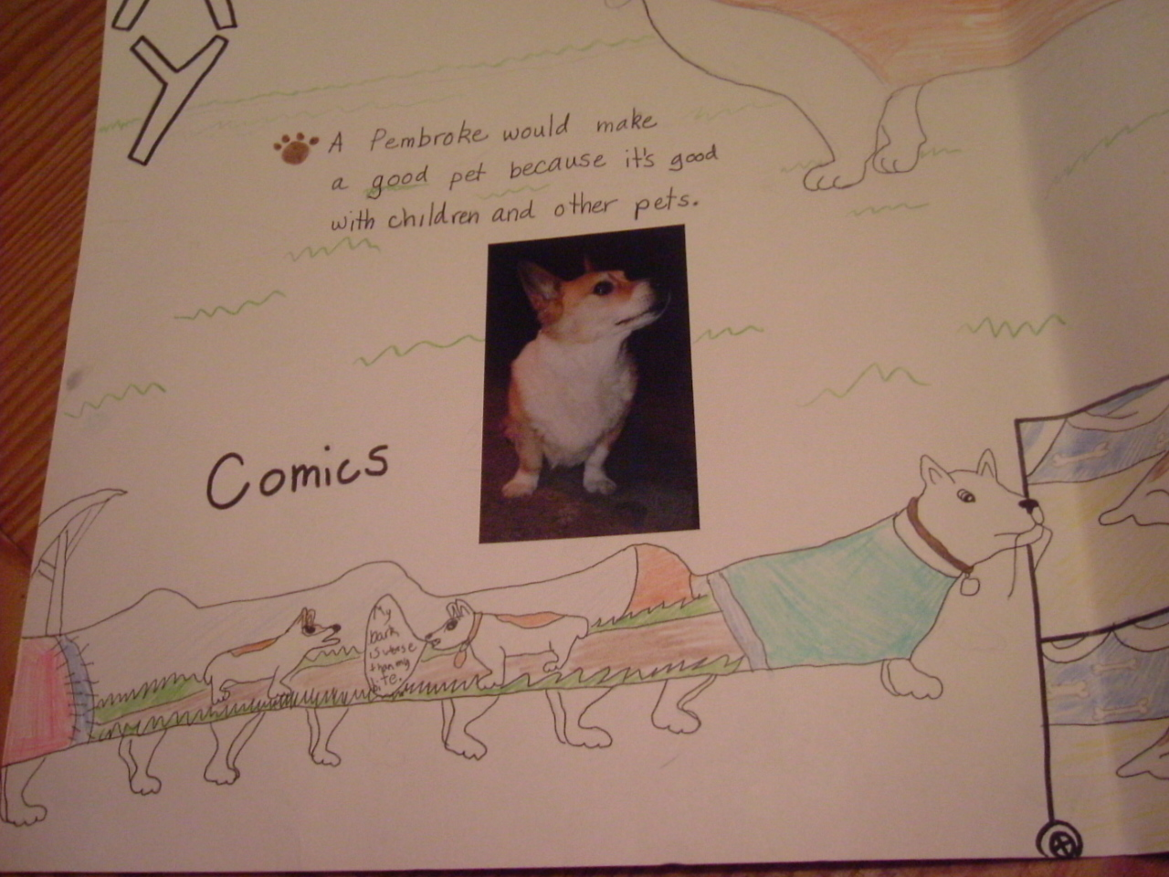 childs corgi comics