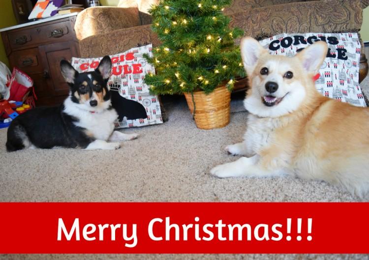 corgi merry christmas