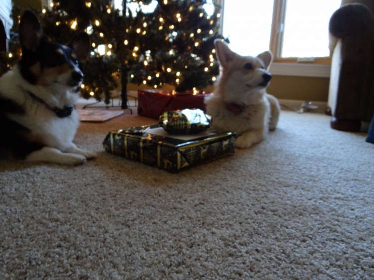 corgi christmas tree gifts